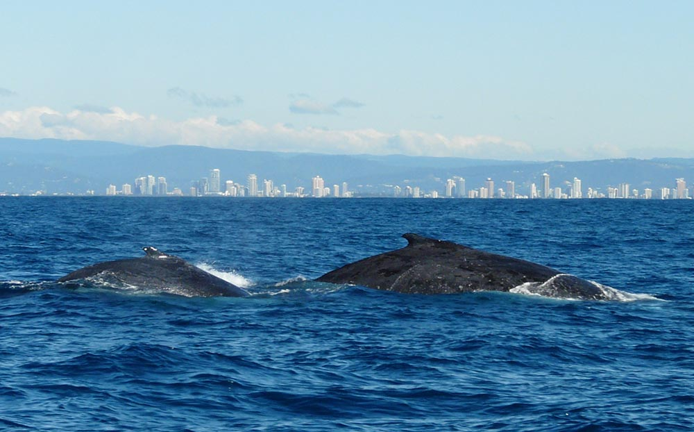 The 10 Best Spots for Whale-Watching in Australia